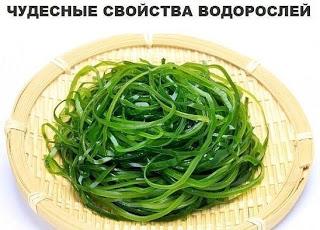 Полезные свойства водорослей