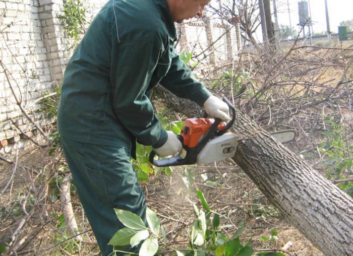 «Спилил - в тюрьму»: что может ждать дачника за срубленное дерево на участке