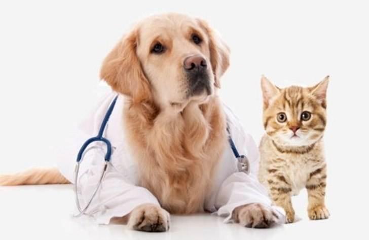 Переполох в ветеринарной клинике…