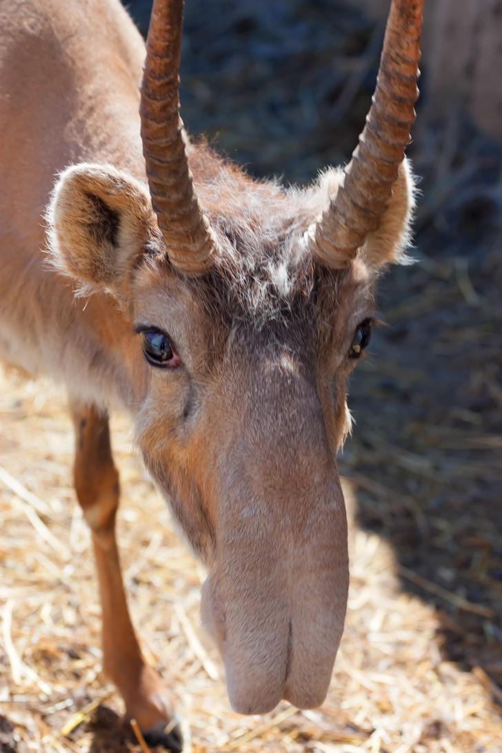 17 животных, которыми природа хотела всех ошеломить и немного переборщила животные,интересное,природа