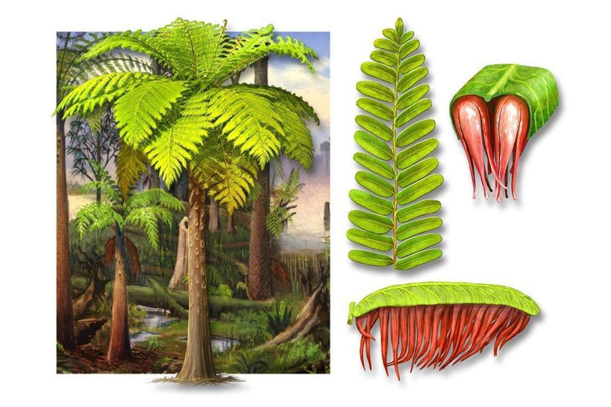 Португальские окаменелости показывают, как изменялась растительность Пангеи в каменноугольном периоде.