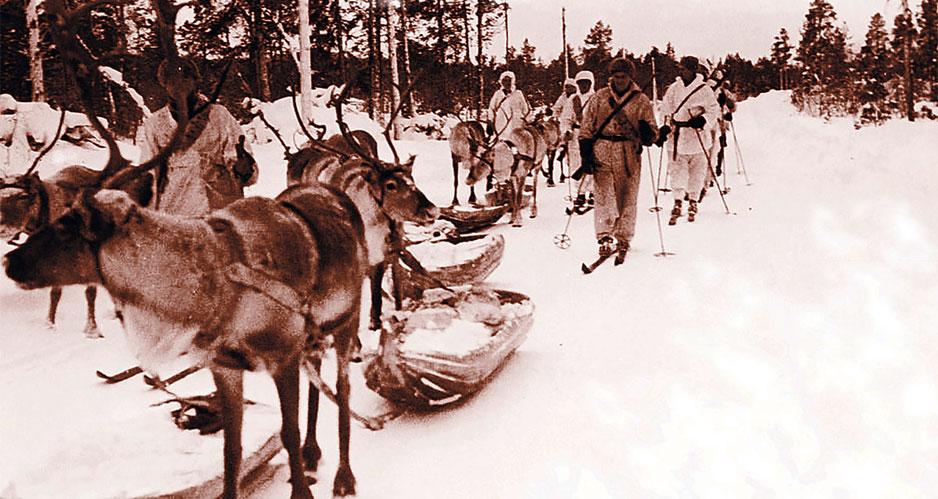 Рогатые диверсанты: войну с финнами пришлось отложить по настоянию зоолога