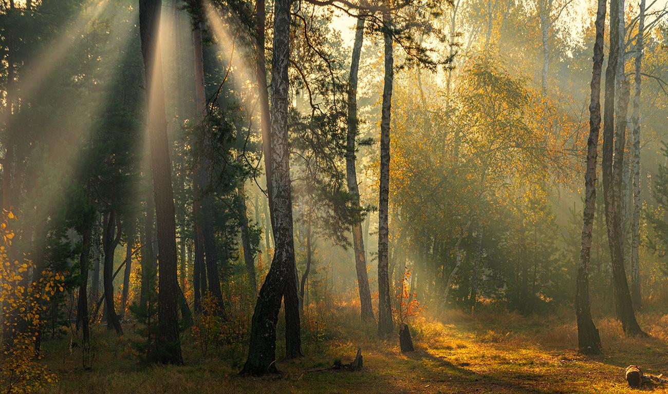Солнечное утро.  Шерман Михаил