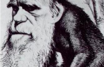 Философия зверя