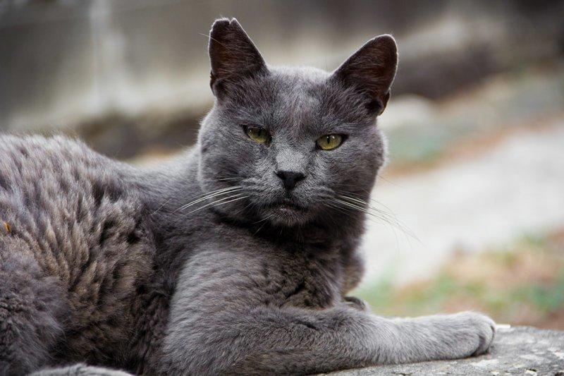 Самые кошачьи города мира: Рим город, кот, кошки, рим, эстетика