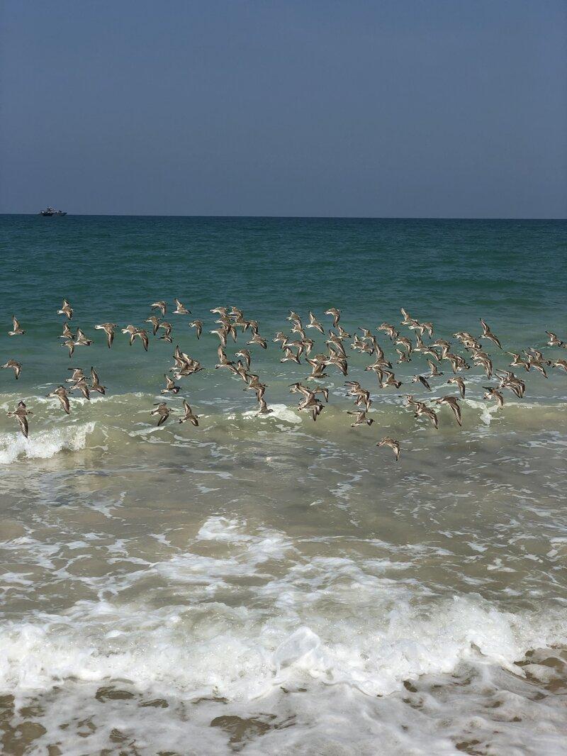 Феномен Тайланда или Почему все едут на Пхукет азия, море, отдых, путешествие, пхукет, тайланд, экзотика