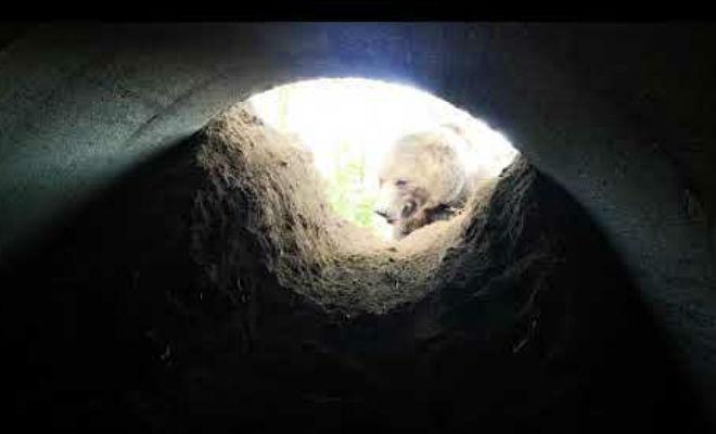 Залезли в берлогу медведя: артефакты 300 лет лежали в норе