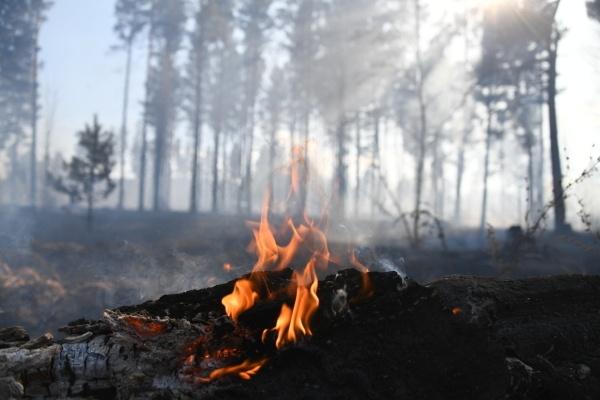 Лесные пожары не угрожают населённым пунктам в Сибири
