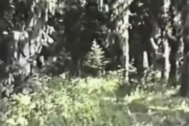 Видео, когда снежного человека возможно сняли на камеру культура