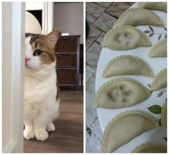 Уморительные коты, которые з…