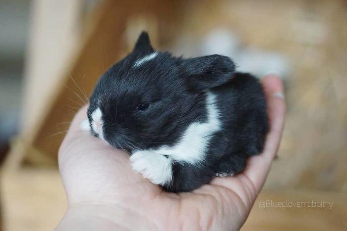 8. Кролики это не только ценный мех, детеныш, детеныши, детеныши животных, кролик, кролики, пушистый позитив, ушастый