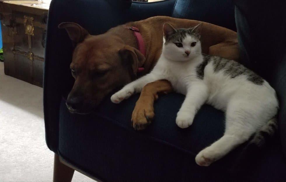 кот и собака на диване