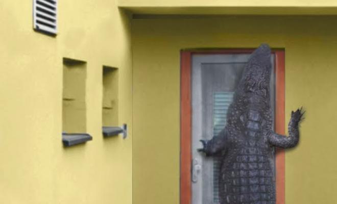 5 случаев вторжения диких животных в дома человека: крокодил у дверей и медведи в бассейне Культура