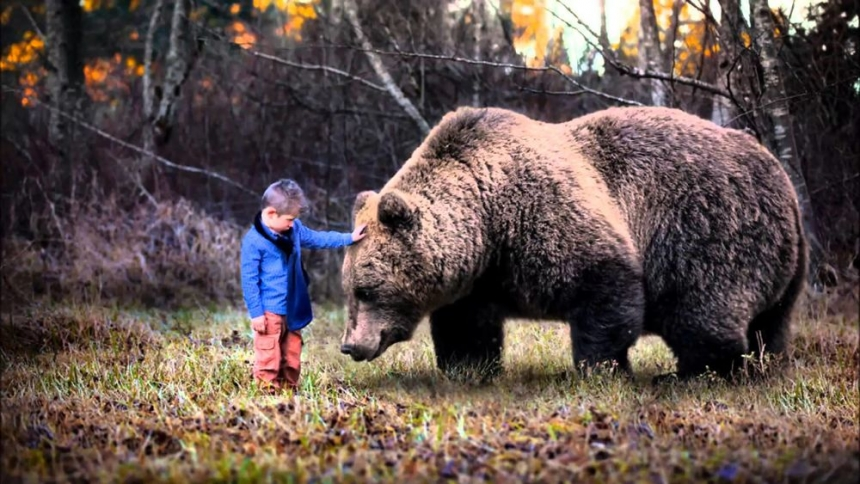 Малыш заблудился в зимнем лесу: на помощь пришел медведь и вывел его к людям Культура