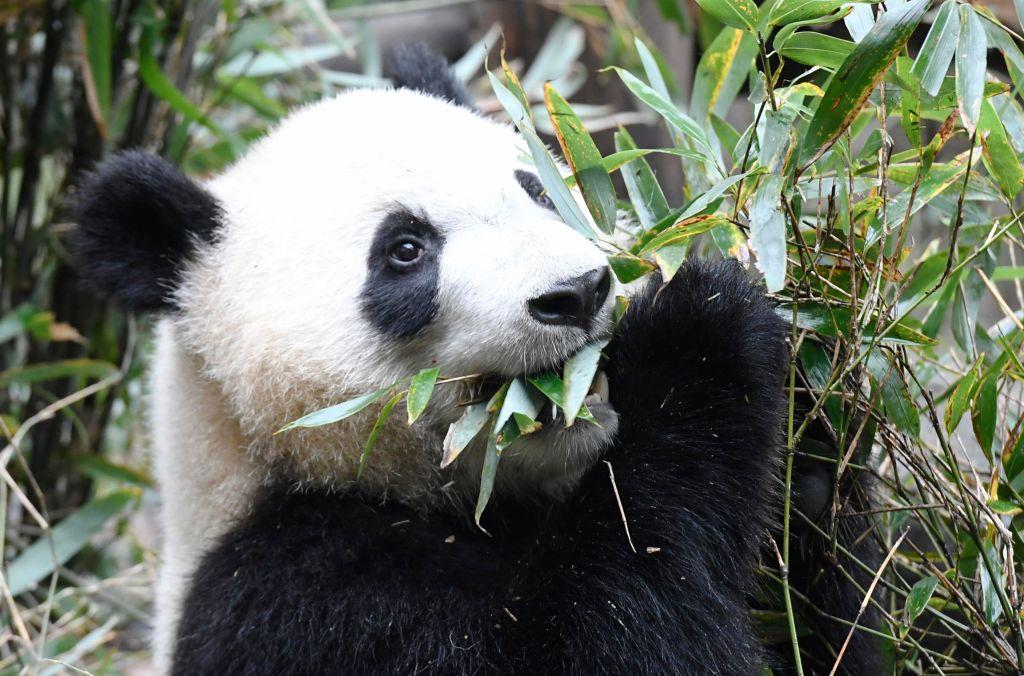 Чай с обжаренным рисом, чай на навозе панды и другие странные напитки, о которых не следует судить по первому впечатлению еда,история,напитки,чай
