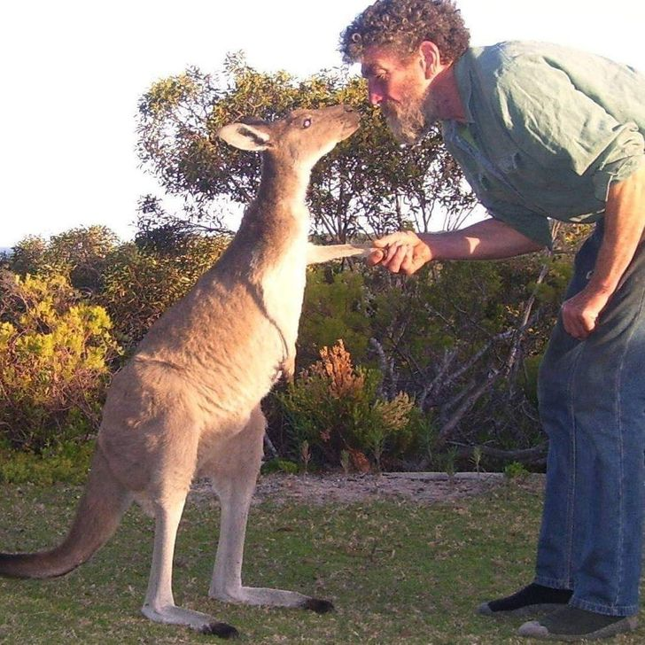 18 фото, которые рассказывают об Австралии больше, чем любой путеводитель Австралия, кенгуру, вАвстралии, питон, дочертиков, людей, новсе, равно, может, напугать, обыкновенная, Просто, Кенгуру, ломают, машины, с1901, «После, 9месяцев, Неопасен, Страна