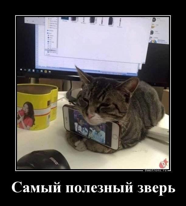 Кошачьи Демотиваторы 11-12-2…