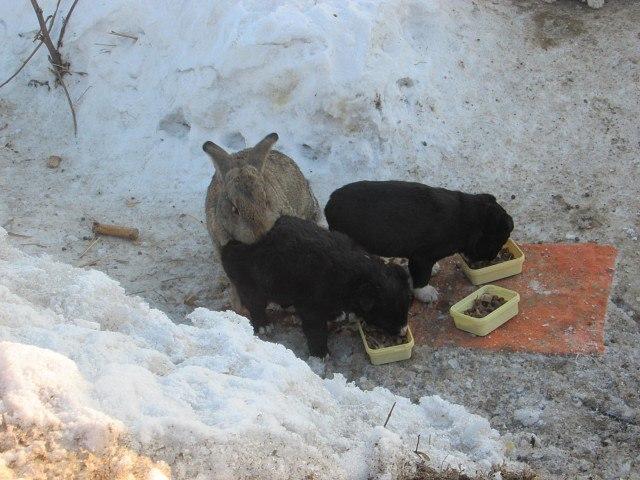 В Омской области сбежавший кролик спас щенков и заменил им убитую собаку! Невероятная история!