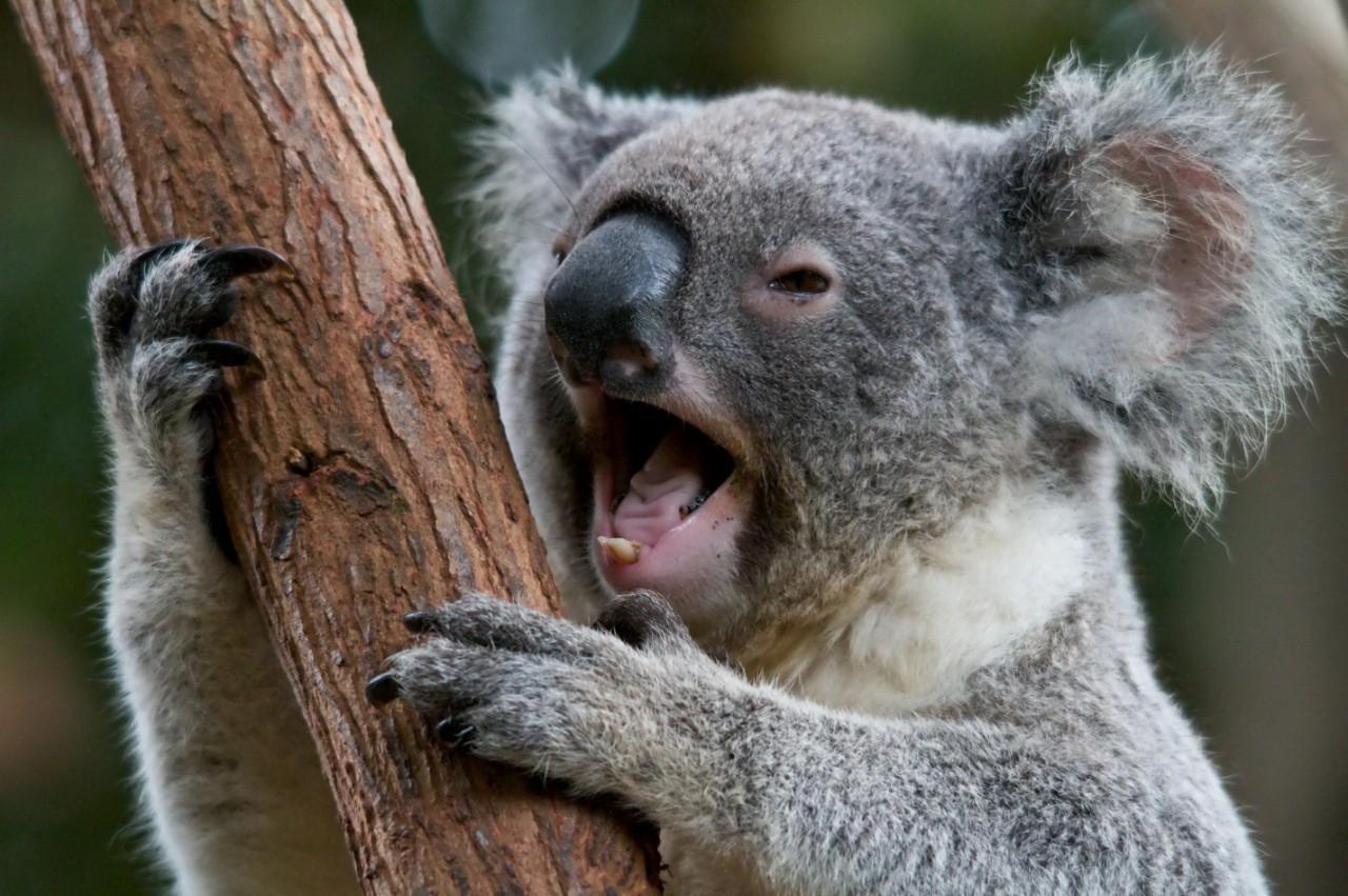 Животные живущие в австралии картинки глазах зрителей