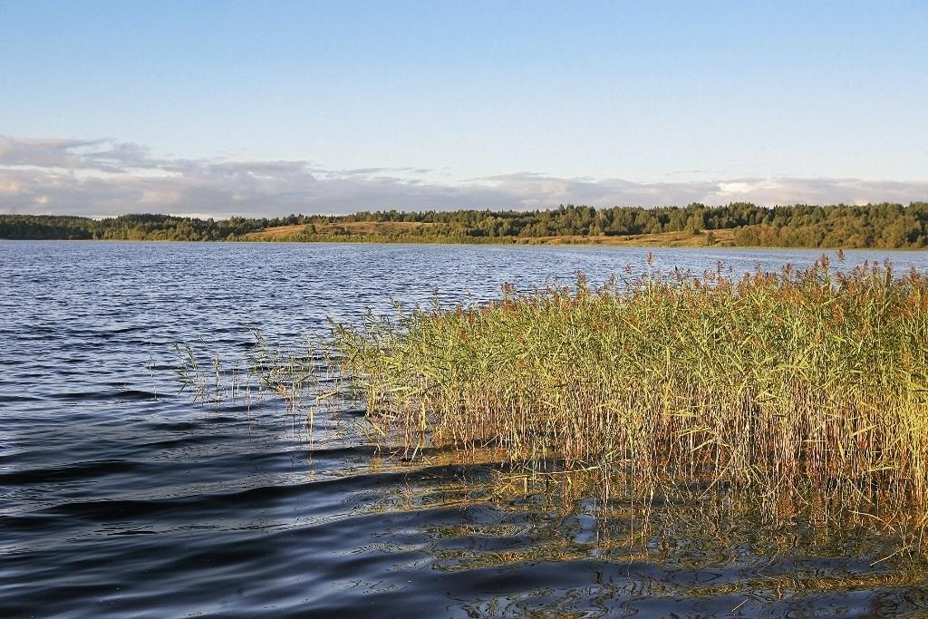 В озёрах мирные пастбищные рыбы (карповые и другие) предпочитают держаться у края водной растительности.