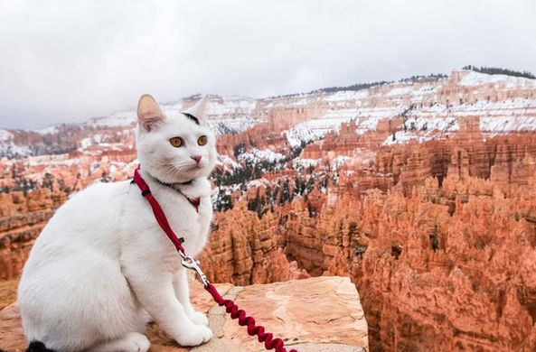 Кот с русским именем объездил всю Америку