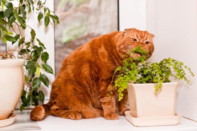 Фэншуй против: 10 мест в квартире, куда лучше не ставить комнатные растения
