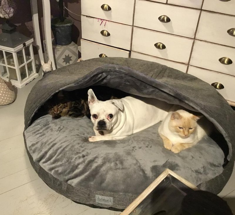 8. Окружили беднягу животные, кошка, милые, собака, фото