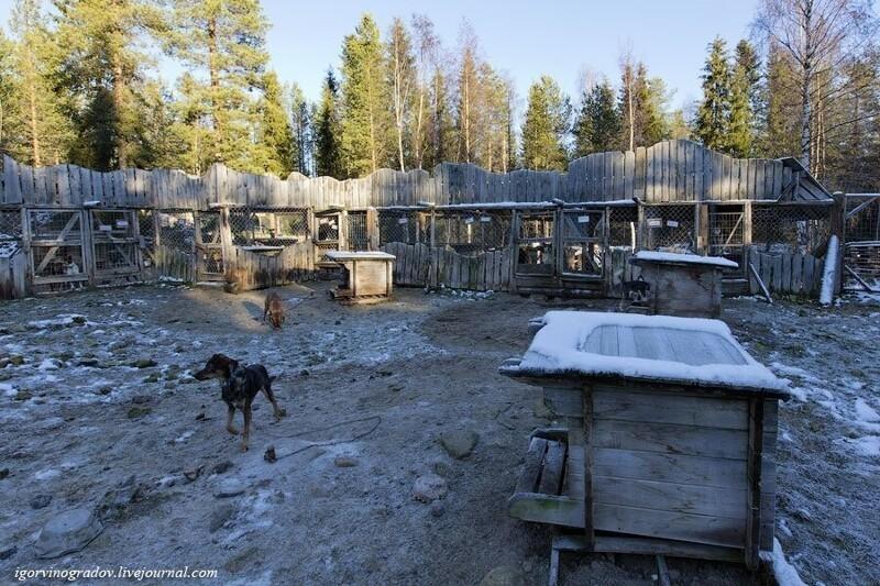 Где живут оленеводы: путешествие в Лапландию Лапландия,олени,Финляндия