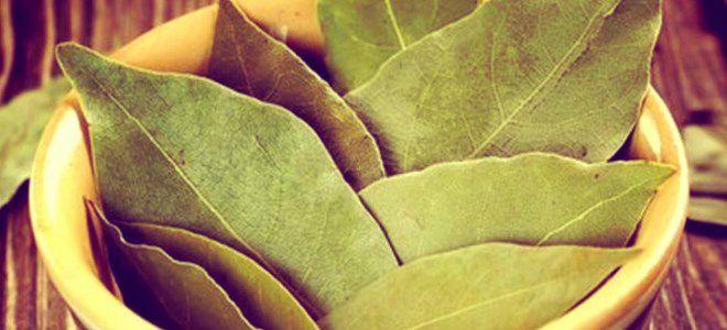 свойства лаврового листа