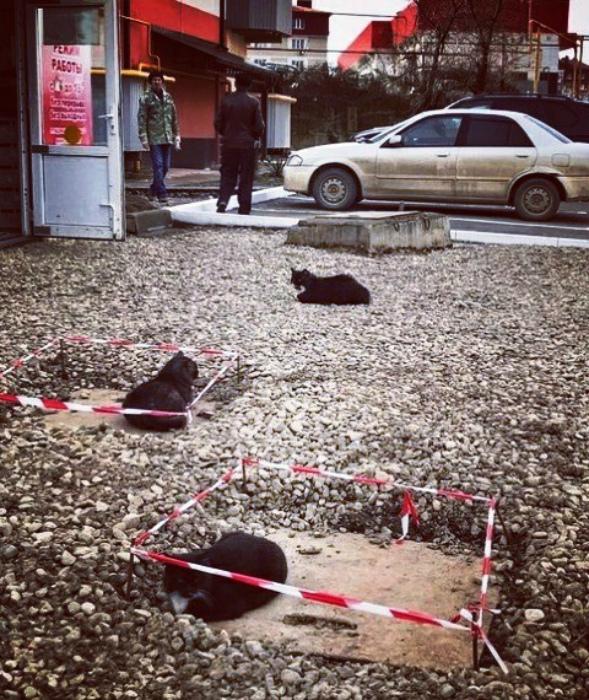 Место преступления Россия. | Фото: Pikabu.