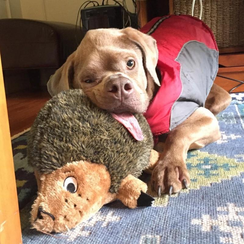 Некрасивый пес из Пуэрто-Рико наконец нашел себе хозяев пуэрто-рико, собаки