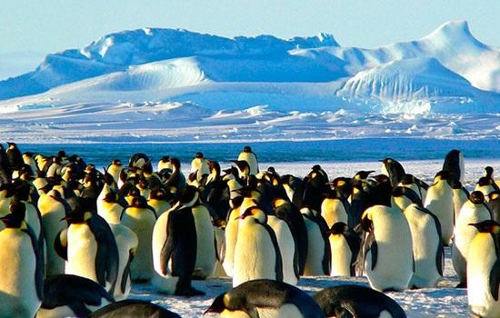 Руководство туризма в Антарк…