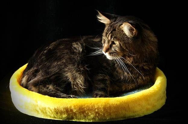 Самодельная лежанка для кошки