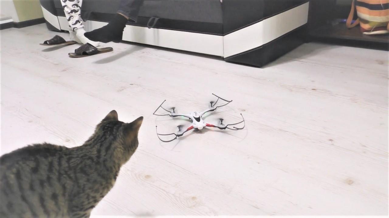 Прикольные коты и кошки. Люб…