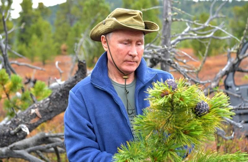 Чем может обернуться попытка Путина спасти российский лес от истребления