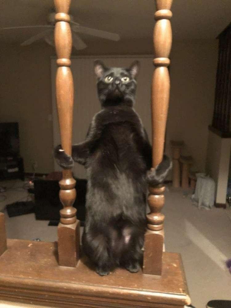 Несколько случаев, когда в котах сломались настройки, и они повели себя странно, но смешно