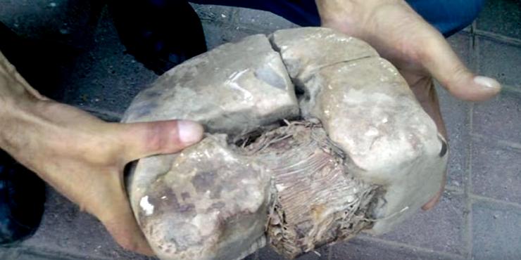 В Косово нашли трансформатор возрастом 20 тысяч лет