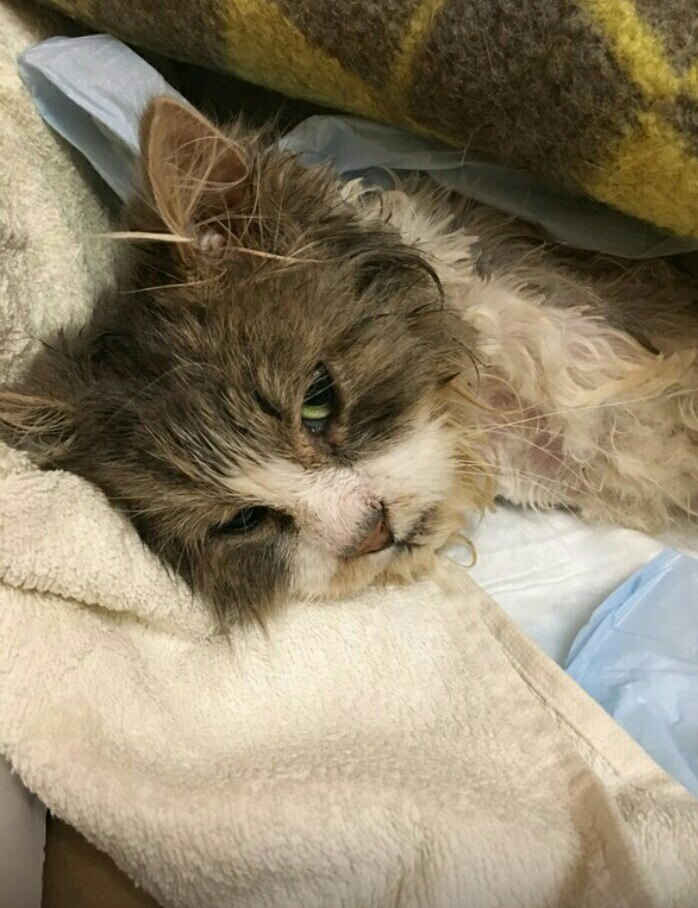 Кот, сбитый машиной, не мог сделать и движения без боли кот, кошка, сбитый кот