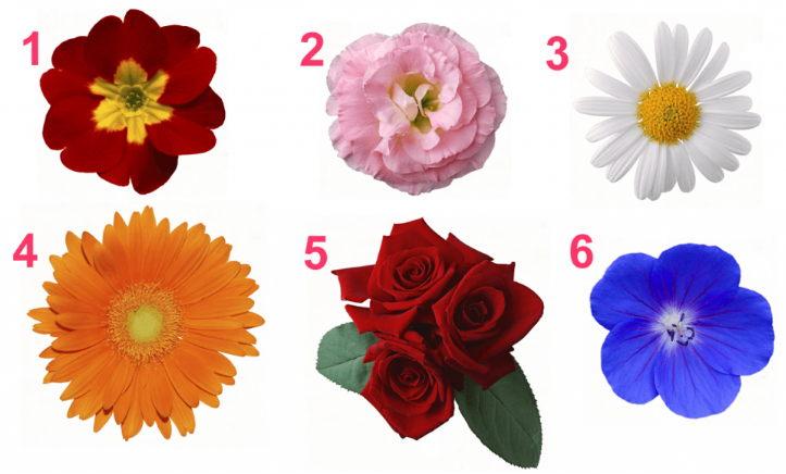 Какой цветок выбираете — такой женственностью и обладаете!
