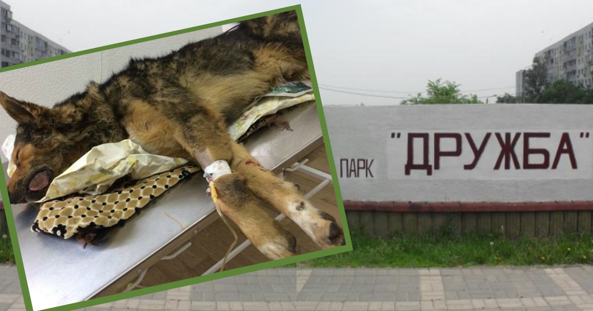 Ростов: хроника очередного о…