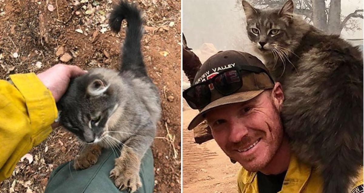 Пожарный спас кошку из огненного ада, а она спасла его
