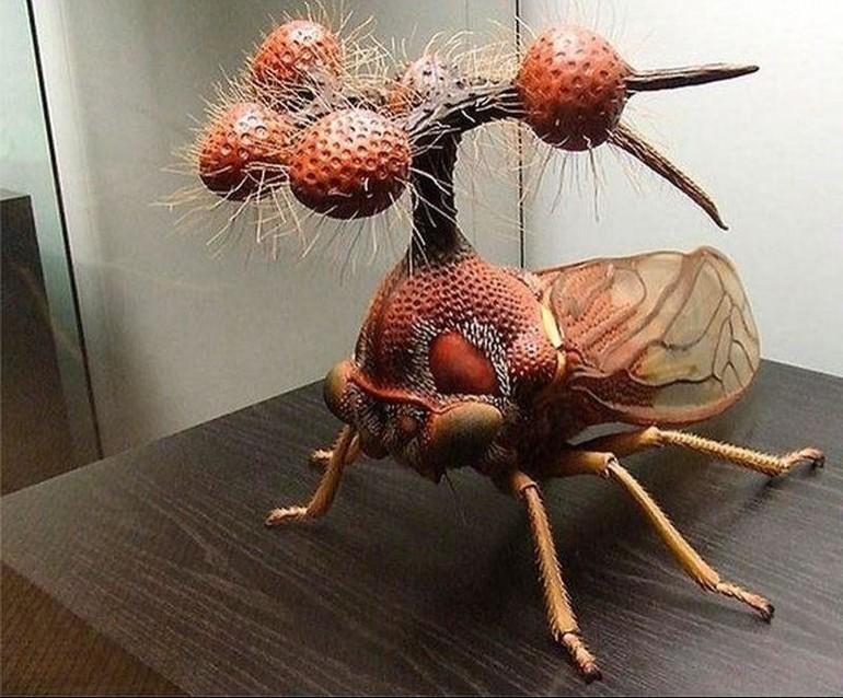 Самые необычные насекомые на планете