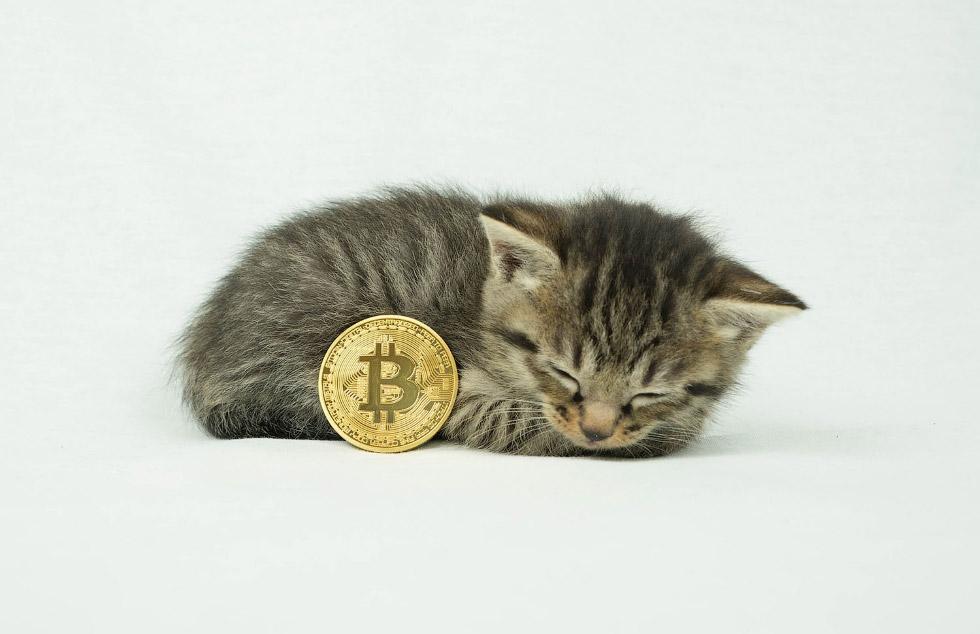 Как выглядят физические биткоины