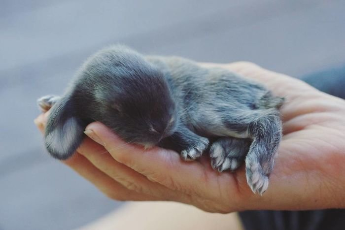 2. Кролики это не только ценный мех, детеныш, детеныши, детеныши животных, кролик, кролики, пушистый позитив, ушастый