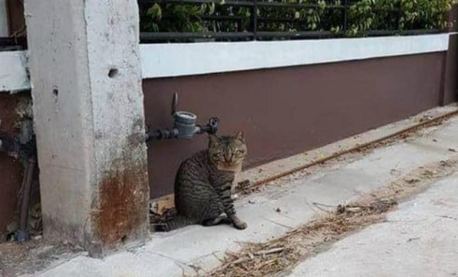 Кот пропал из дома на 3 дня. Когда его уже перестали ждать, кот вернулся сытый и принес записку Культура