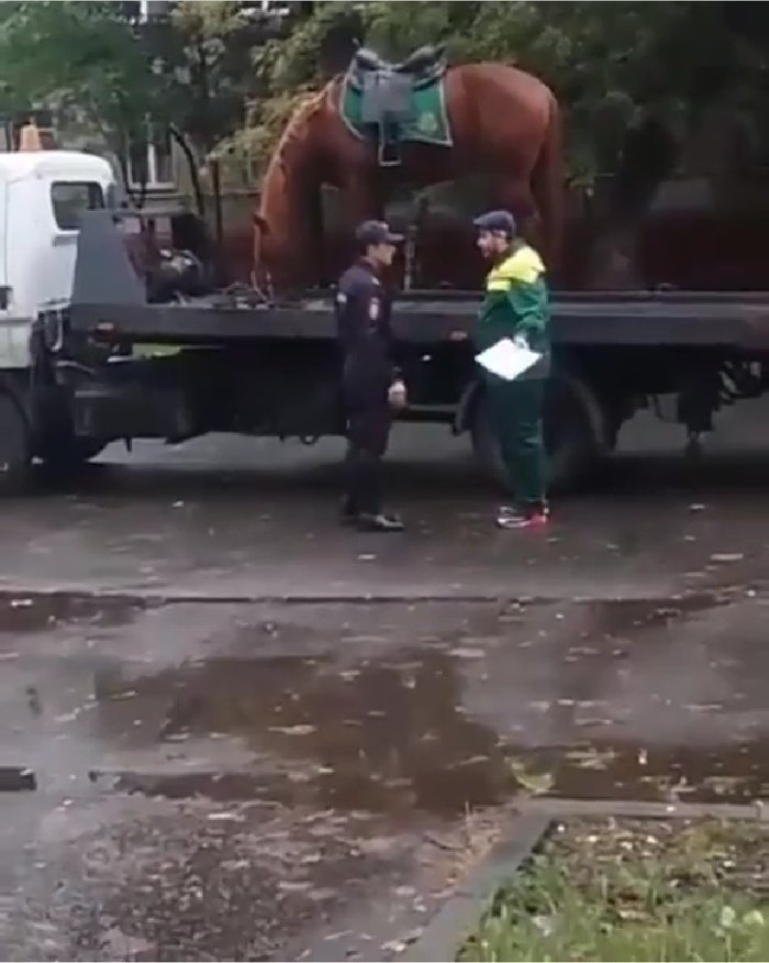 Ничего необычного, просто эвакуируют полицейскую лошадь. закон, курсант, мвд, парковка, полиция, прикол, форма, юмор