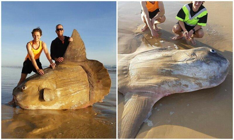 Рыбаки думали, что на берегу лежит бревно, но это оказалась редкая рыбина