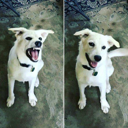 Смешные питомцы до и после того, как их назвали хорошими мальчиками