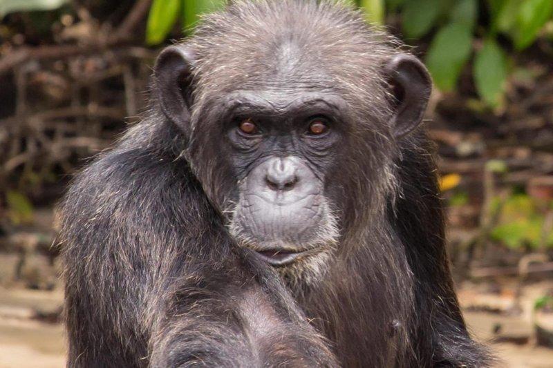 Тайная жизнь острова обезьян