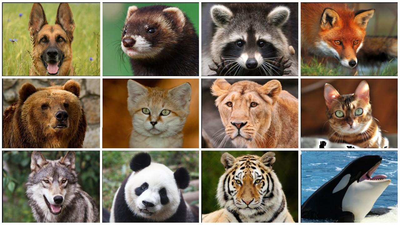 С каким хищным животным можно сравнить женщин разных знаков Зодиака
